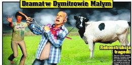 Krowa zabiła rolnika kołkiem!