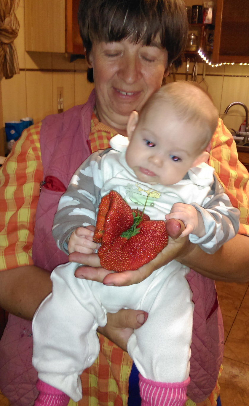 Wyhodowała truskawkę giganta