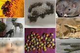 zivotinje i insekti kombo