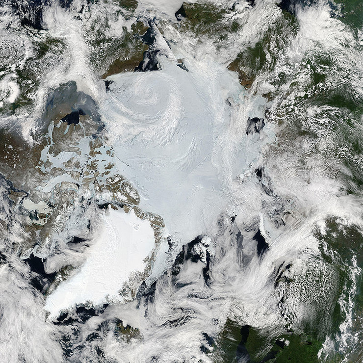 Arktik Wikipedia