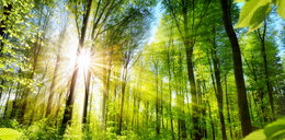 Przesilenie letnie. Kiedy wypada najdłuższy dzień w roku 2021 i pierwszy dzień lata?