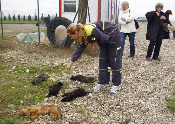 I u Loznici juče stravičan prizor: Pobijeni kučići stari od četiri do šest meseci