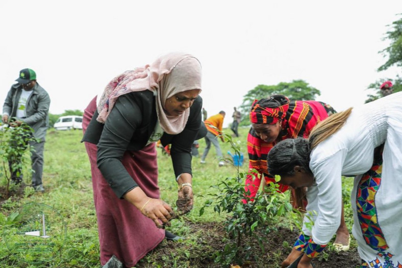 Ethiopia's feat has shattered the current World Record for planting trees in a single day held by India, which used 800,000 volunteers to plant more than 50 million trees in 2016.