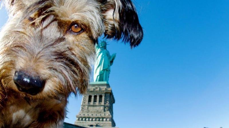 Oscar - pies podróżnik