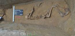 Szczątki odnalezione przy budowie S7 pochowane w Miechowie