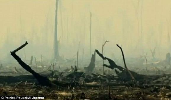 ... a ovako njena prašuma izgleda danas