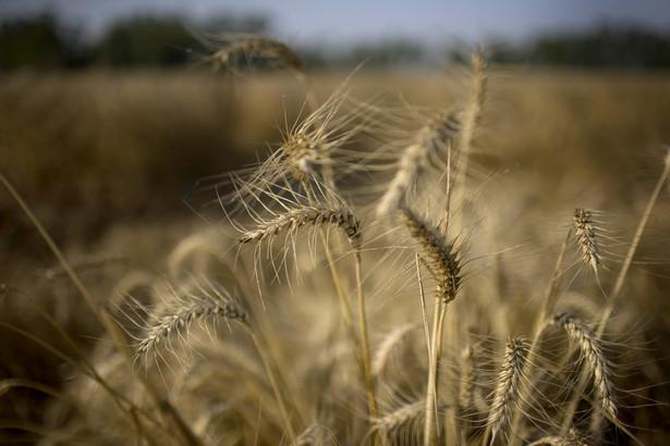 Rosja jest trzecim co do wielkości światowym eksporterem zbóż.