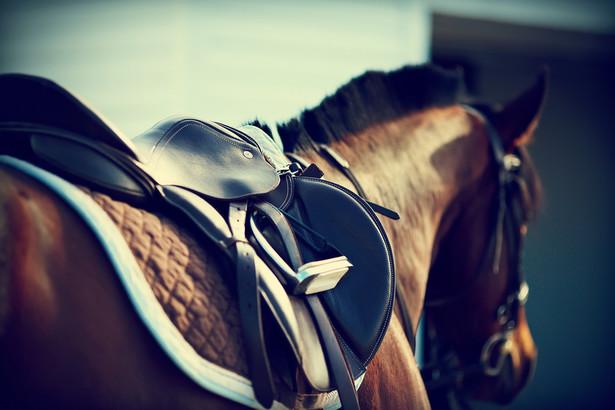 """14 sierpnia na aukcji koni arabskich """"Pride of Poland"""" zdobywczyni wielu tytułów w kraju i za granicą, 16-letnia siwa klacz Emira, pochodząca ze stadniny w Michałowie, została sprzedana za 225 tys. euro nabywcy z Francji."""