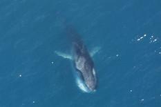 69140_odrasli-veliki-kit-wiki
