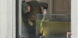 Grycanki polują w rybnym