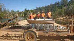 600-kilogramowy krokodyl złapany w Australii po 10 latach poszukiwań