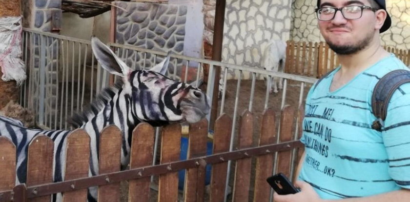 Szok! Zoo pomalowało osły i wmawia, że to zebry