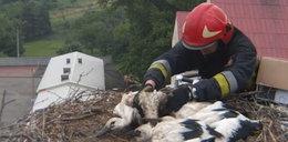 Strażacy uratowali boćka