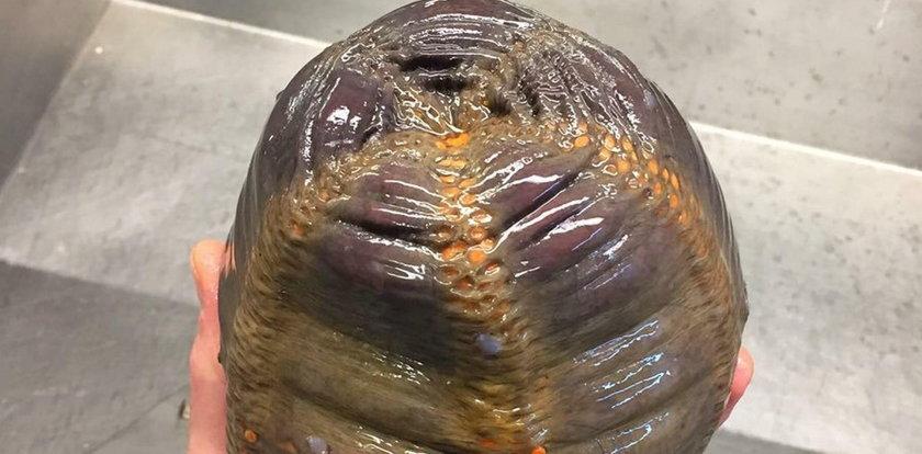 Przerażające! Wyłowił to z morza, nikt nie wie, co to jest!