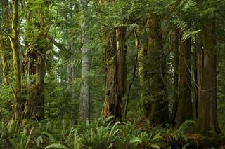 Holandia odpowiada za wylesianie obszarów tropikalnych