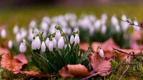 Zobacz jak pięknie wiosna budzi się do życia
