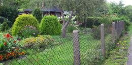 W Śródmieściu możesz mieć ogród