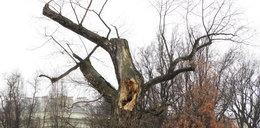 Wiemy, co zastąpi legendarny Baobab w Lublinie