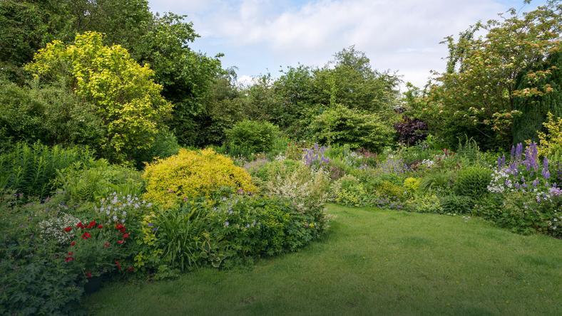 Trawnik, ogród