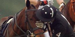 Książę William pocałował... konia