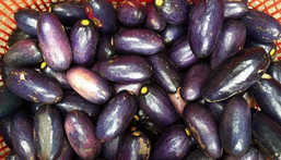 Ube: Health benefits of African or bush pear