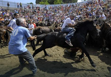 """Borci"" se muče da obore divlje konje na zemlju golim rukama"