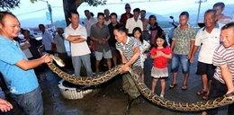 4-metrowy wąż chciał zjeść 73-latka! Jak staruszek pokonał gada?