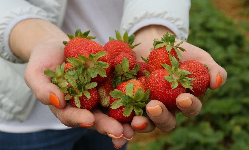 To był bardzo zły rok dla producentów uwielbianego przez Polaków owocu