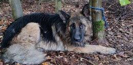 W lesie usłyszała wycie psa. Zwierzak był przywiązany do drzewa i skazany na pewną śmierć