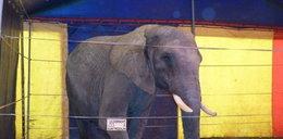 Słoń zabił niemieckiego emeryta
