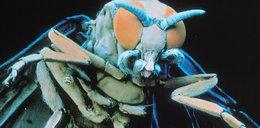 Skóra miesiączkujących Polek rozszarpywana przez insekty!