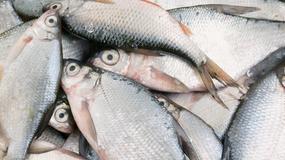 Tajemnicza śmierć ptaków, teraz padły ryby