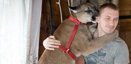 Koniec sporu o Nubię? Właściciel pumy i zoo w Poznaniu podpisali ugodę