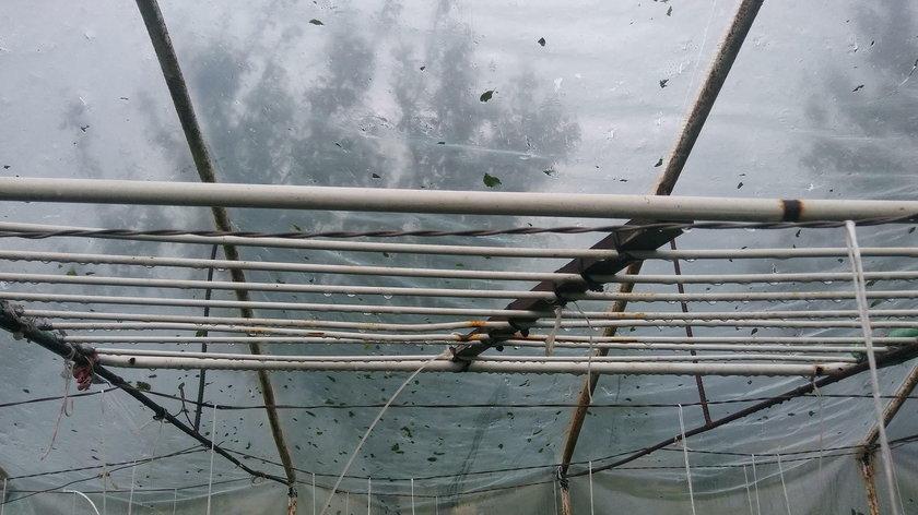 W Małopolsce padał grad wielkości śliwek