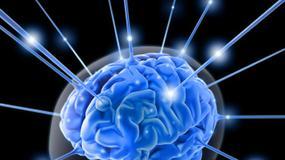 W laboratorium wychodowano ludzki mózg