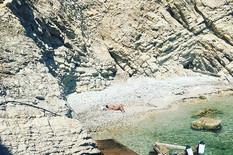 NJEN SUPRUG OBJAVIO FOTOGRAFIJU Naša pevačica otišla na napuštenu plažu i SKINULA gornji deo kupaćeg