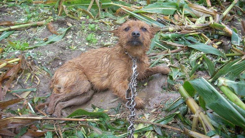 Pies przeszedł operację, pracownicy mają nadzieję, że uda się go uratować