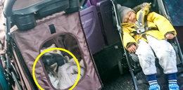 Wózek z kotem ważniejszy od małego dziecka. Kierowca niewzruszony