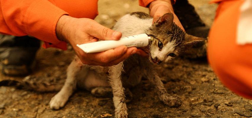 Ten kot oszukał przeznaczenie. Strażak uratował go z płomieni