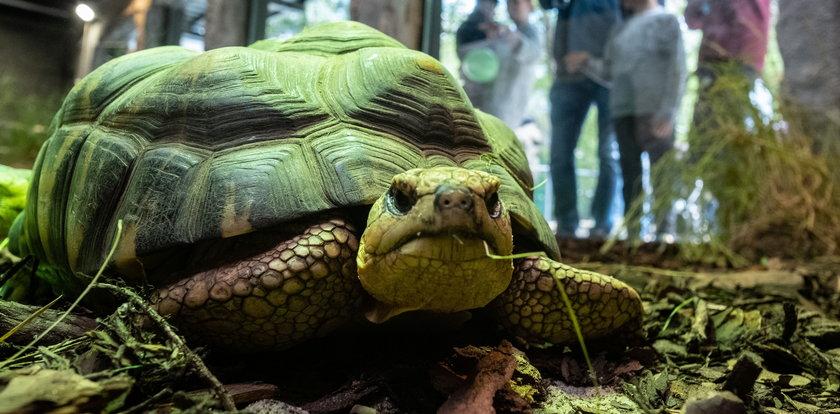 Żółwie mają nowy dom