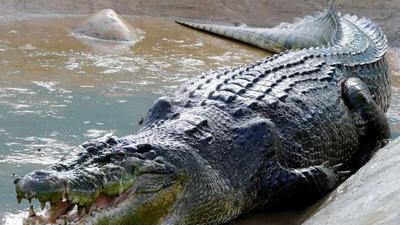 Pastor eaten alive by crocodiles as he attempts to walk on water like Jesus