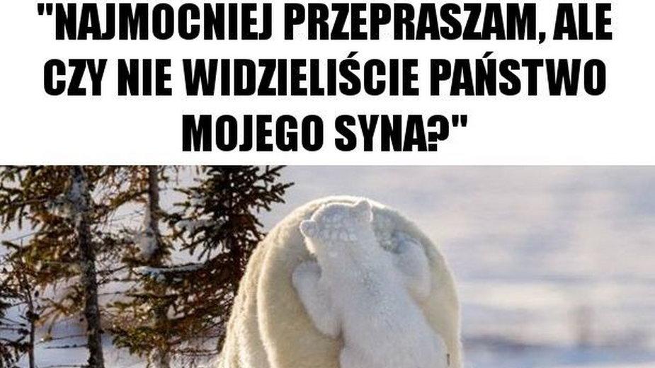 Najśmieszniejsze memy ze zwierzętami w roli głównej