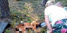 Z psa została sama skóra i kości. To cud, że jeszcze żył! Policja szuka oprawcy, który nieomal zagłodził zwierzę na śmierć