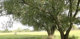 Ciała dwóch 13-latek znalezione na gałęzi samotnej wierzby. Szykowały się na własną śmierć