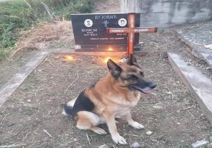 Pas Mića na grobu gazdarice Živke