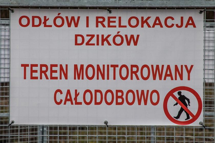 Oto pierwsza w Krakowie odłownia dzików