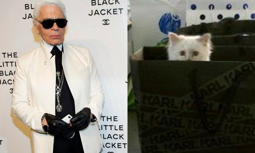 Kotka Karla Lagerfelda