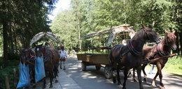 Zbadają konie wiozące turystów