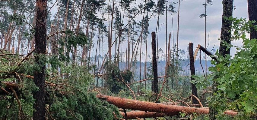 Burze i nawałnice znów sieją spustoszenie. Straszny obraz zniszczeń. Na Pomorzu drzewo runęło na namioty na kempingu [ZDJĘCIA, WIDEO]