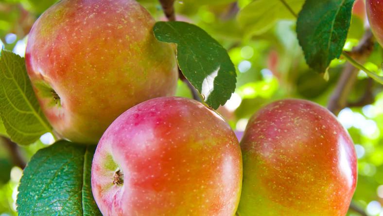 Rosja nie przepuściła ponad 200 ton owoców, w tym z Polski